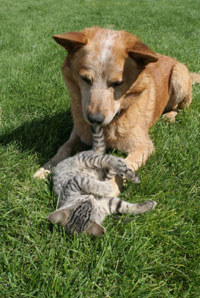 Dog and Cats are vulnerable to pesticides
